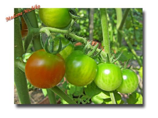 トマト、アップ_edited-2