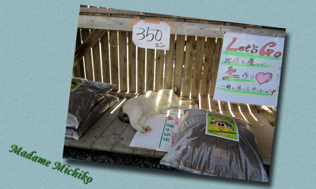 辰頭温泉猫のコピー